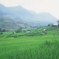 paysage Sapa