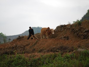 cultivateur region de meo vac vietnam