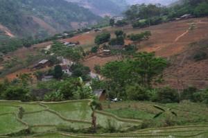 rizière Yen Minh vietnam