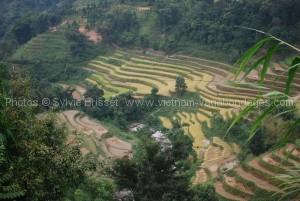 rizière Hoan Su Phi