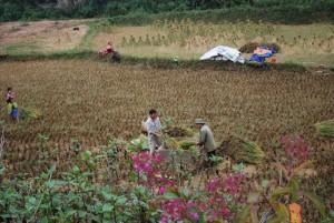 Xi Man Vietnam