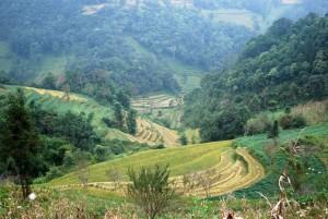 rizière route Bac Ha  Xi Man