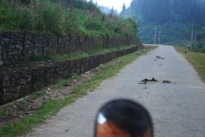 bouse de buffle route au vietnam