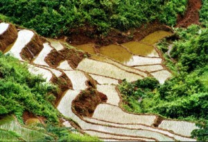 rizière-Mai Chau-vietnam