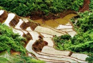 visiter les rizières avec un guide