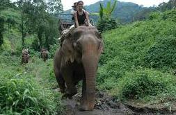 promenade-dos-elephant-viet
