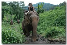 promenade dos elephant Buon Me Thuat ( Dak Lak)