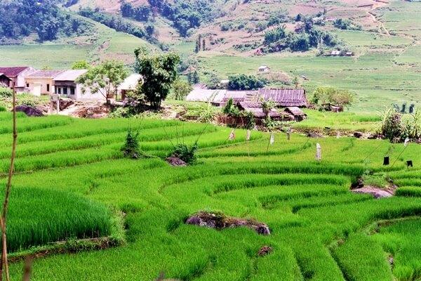 sapa-riziere-vietnam