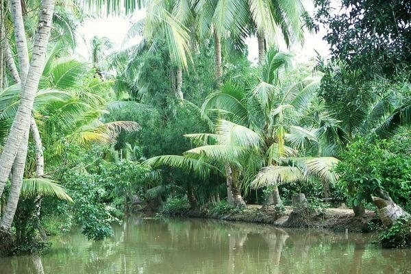 delta mekong aroyo