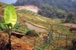 Trek authentique dans le parc  de Pu Luong
