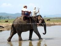 Dak Lak -promenade dos eléphants