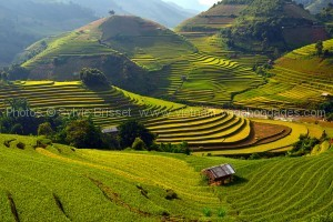 rizière de Mu-Cang-Chai