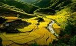 Route des Photographes nord Vietnam photos de rizières et trek 3 jours