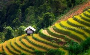 circuit rizière vietnam