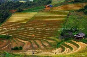 route-photographe-Mu Cang Chai
