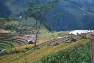 decouvrir voyager Vietnam avec enfants