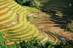 Tarif spécial pour ce circuit 15 jours Vietnam du nord au sud»LA COULEUR DU RIZ «