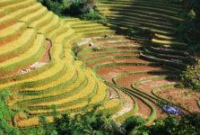 promo 15 jours voyage vietnam découverte rizière