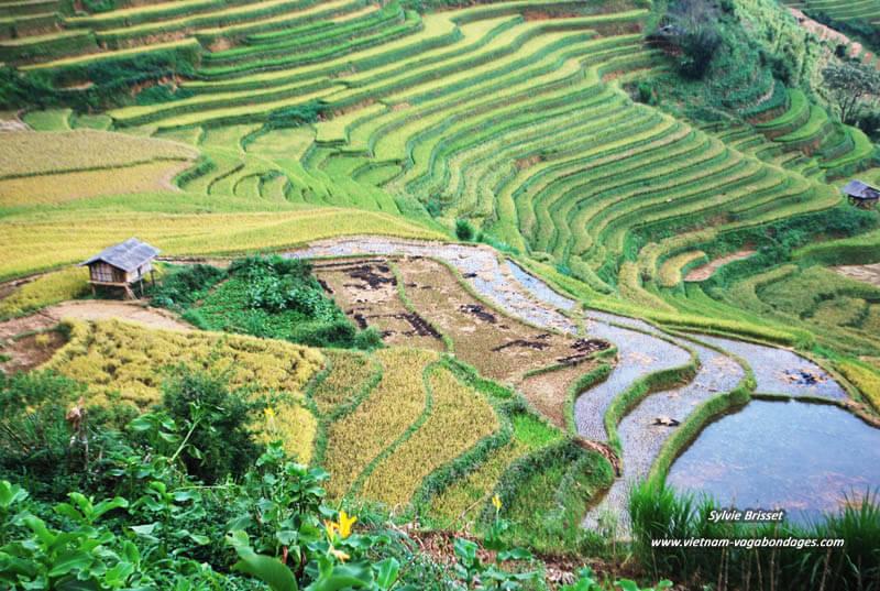 circuit route photos Mu Cang Chai