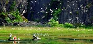 les-oiseaux-de-réserve-de-Van-Long