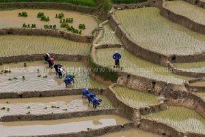 vietnam voyage 15 jours rizière en eau