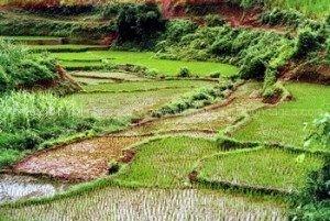 voyage 15 jours vietnam Rizière