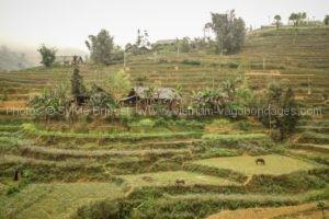Circuit Vietnam randonnée Sapa et Bac Ha