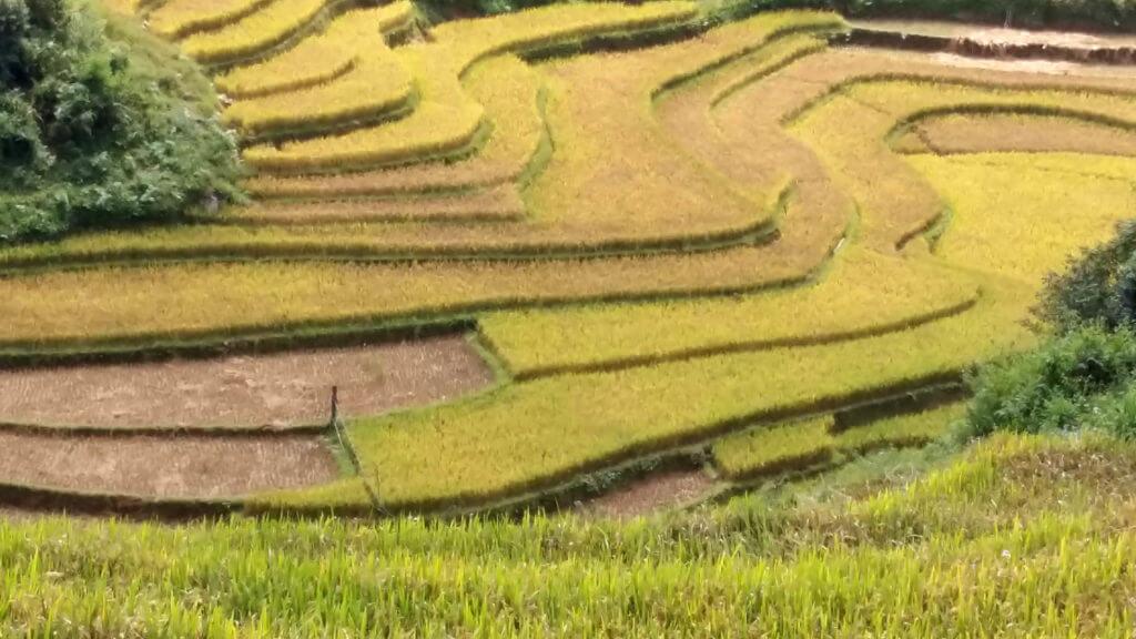 circuit vietnam 15 jours couleur du riz
