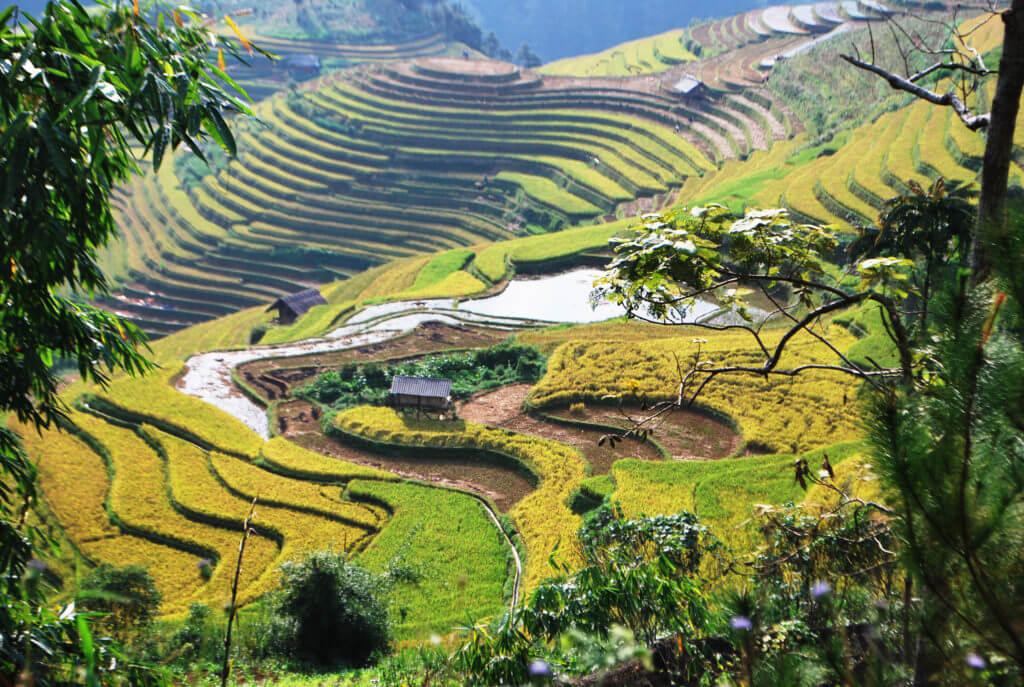 circuit 12 jours -Vietnam- rizière