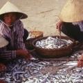 phan-tiet-vietnam