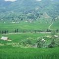 rizière Sapa