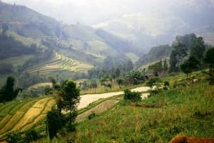 rizières nord vietnam  Bac Ha