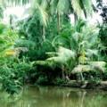 arroyo-mekong