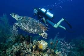 plongee sous marine Na Trang