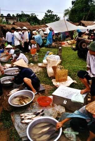 marche de poisson campagne vietnam