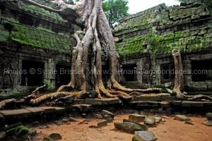 ruine d'Angkor