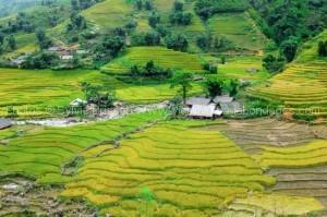 sapa-trek sur mesure-vietnam