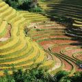 """Voyage 15 jours Vietnam du nord au sud """"Circuit LA COULEUR DU RIZ """""""