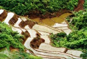 itinéraire Vietnam 12 jours nord au sud avec Maichau