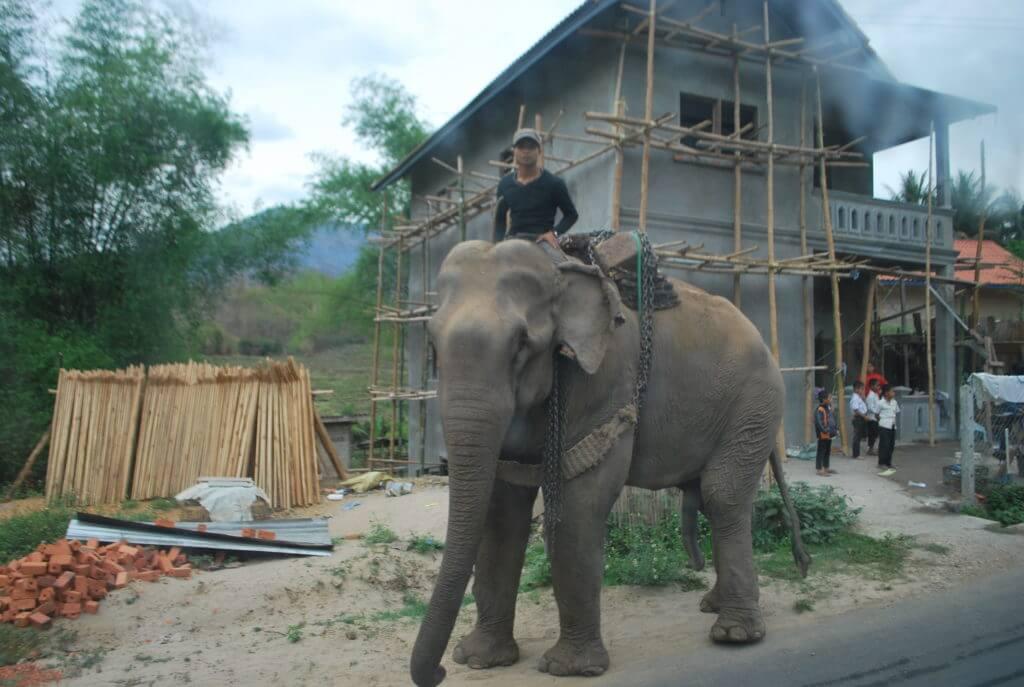 Laos Eléphant sur la route Nong Kiaw - Pak Beng