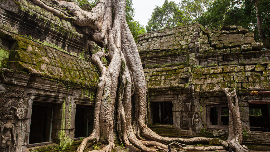 Circuit francophone Cambodge_temple Ta Prohm